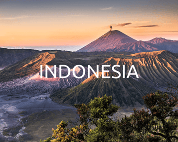 Plant Trees in Indonesia