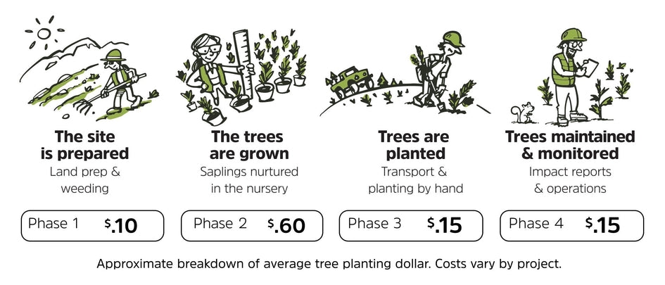 How tree planting works
