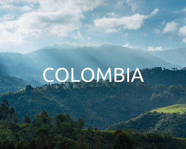 Plant trees in Colombia
