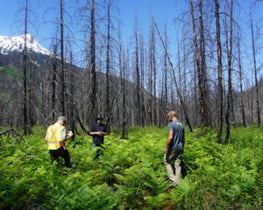 Forest recovery in BC