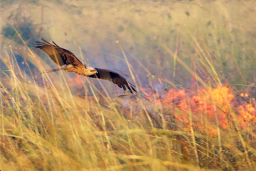 how nature adapts after forest fires
