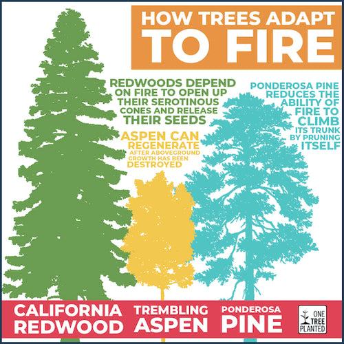 How trees adapt to forest fires