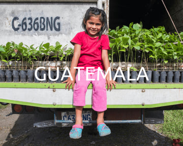 Plant Trees in Guatemala