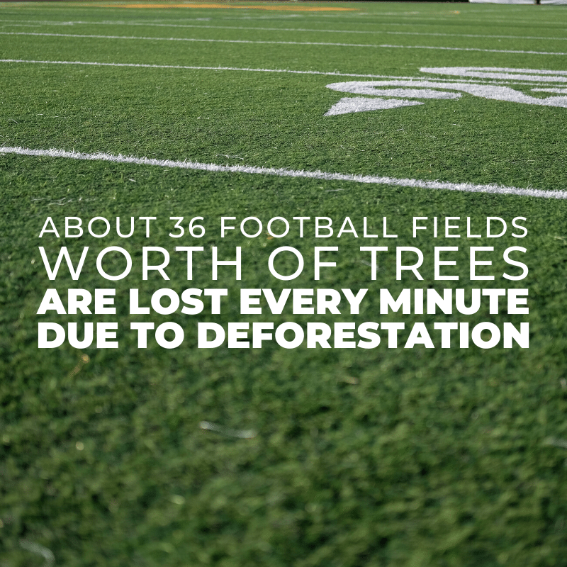 About 36 football fields worth of trees are lost every minute due to deforestation