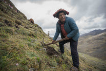 man planting trees andes mountainside