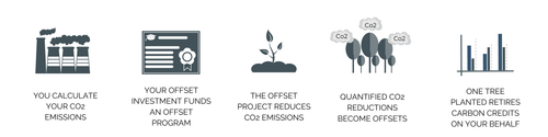 step-by-step process to offsetting your carbon emissions