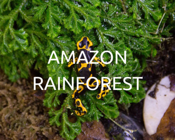 Plant a tree in the Amazon Rainforest