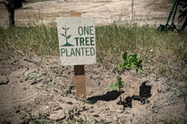 one tree planted sign tree planted