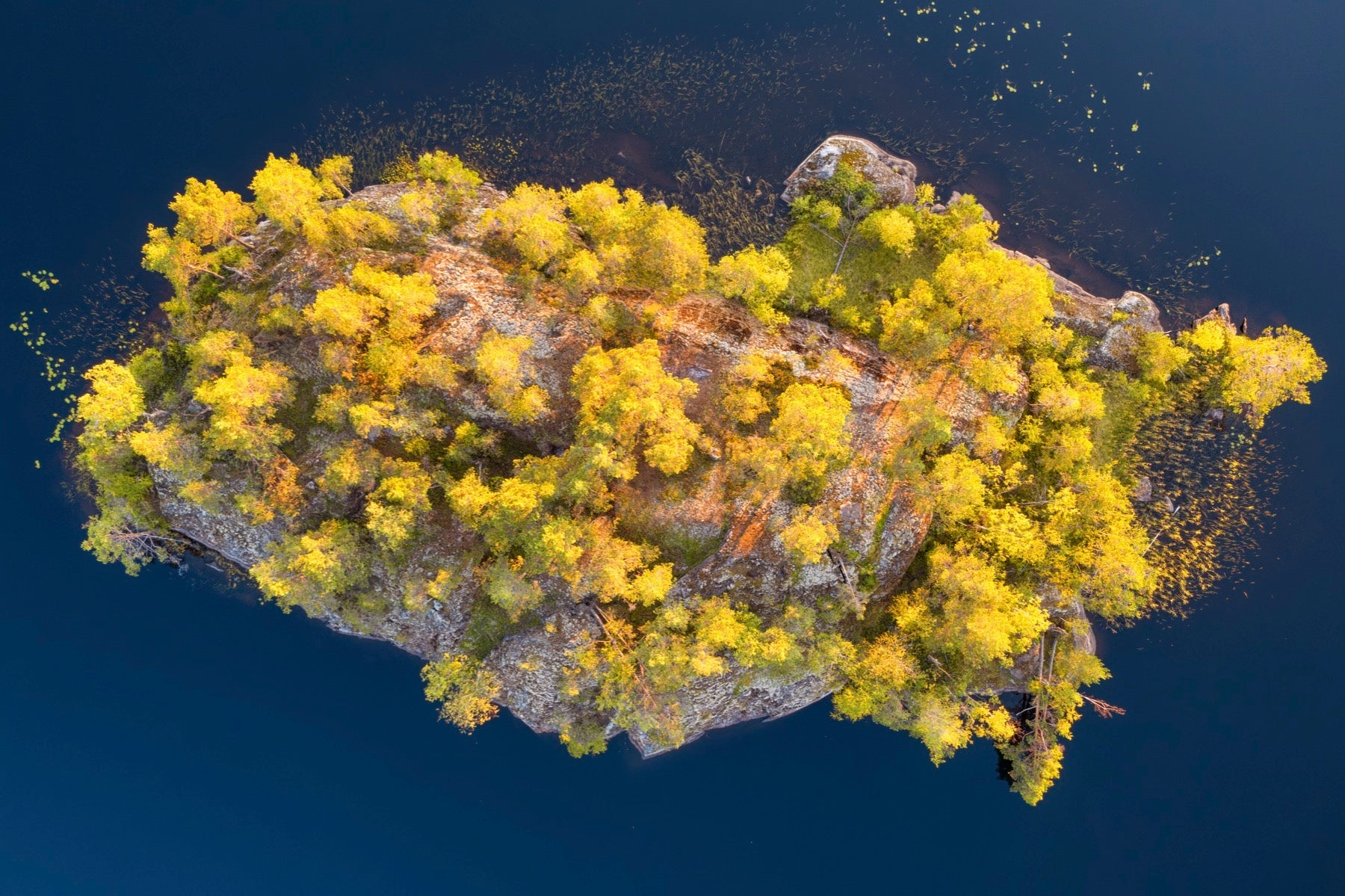 small island forest