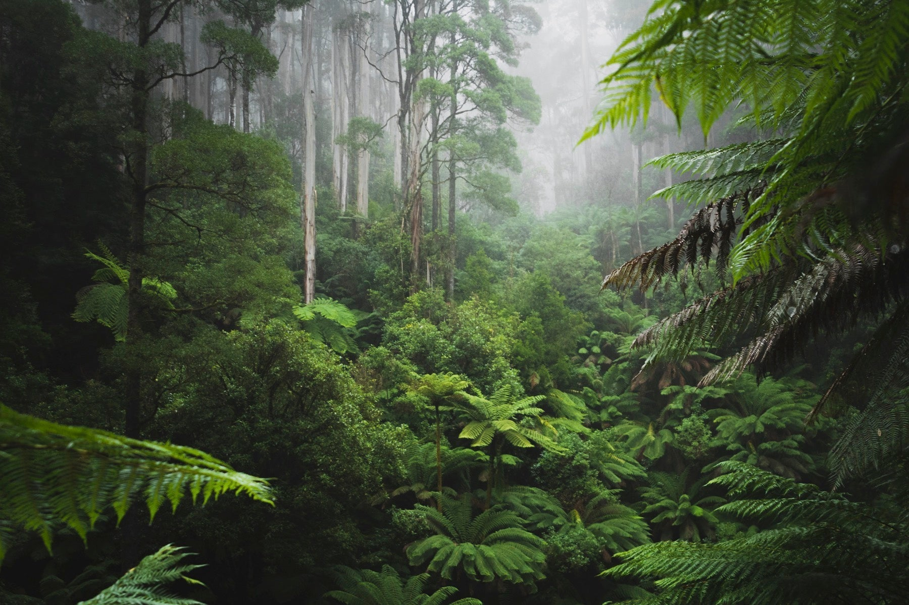 tropical forest ecological biodiversity