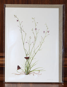 "Greeting Card - ""Chocolate Lily with Butterflies"""