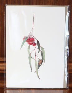 "Greeting Card - ""Eucalyptus Caesia, with Australian Painted Lady"""