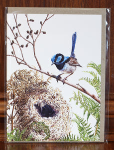 "Greeting Card - ""Guarding the Nest; Male Superb Blue Wren"""