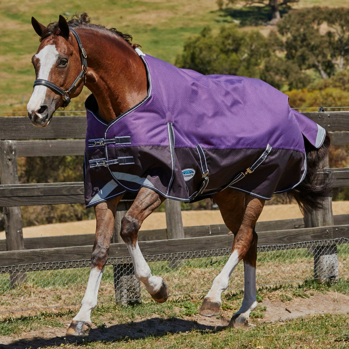 WeatherBeeta ComFiTec Plus Dynamic Standard Neck Medium/Lite Horse Blanket