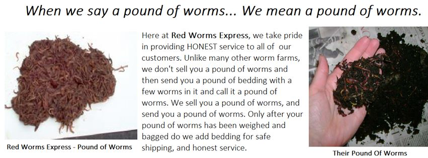 When we say a pound of worms.... We mean a pound of worms!