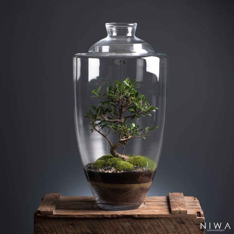 NIWA DESIGN | Manhattan | Terrarium