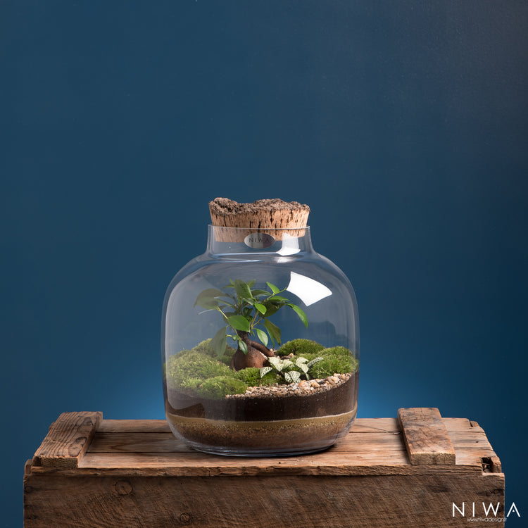NIWA DESIGN | Roots | Terrarium