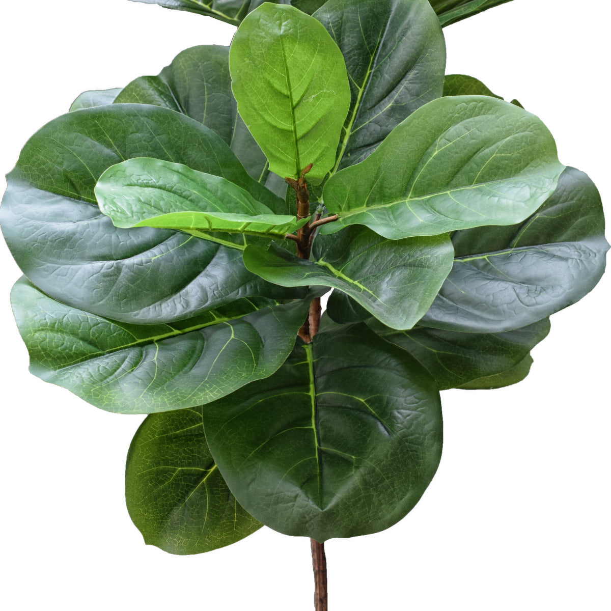 Tall Artificial Fiddle Leaf Fig 170cm