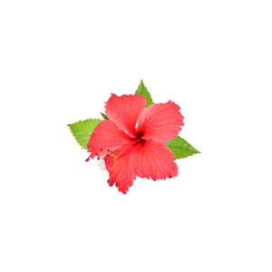 Hibiscus Powder - IQ Organic Solution