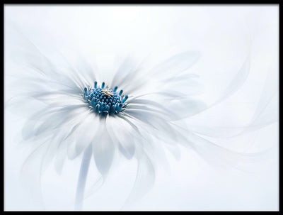 Vossington wall art and fine art photography of a decorative flower with abstract shapes