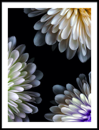 Vossington wall art and fine art photography of three white flowers in a geometric arrangement