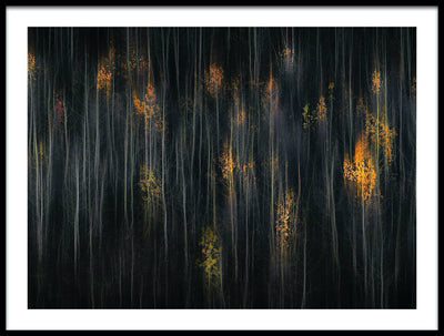 Vossington wall art and fine art photography of an autumn forest scenery with abstract trees