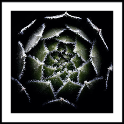Vossington wall art and fine art photography of an abstract succulent plant with aesthetic geometric shapes