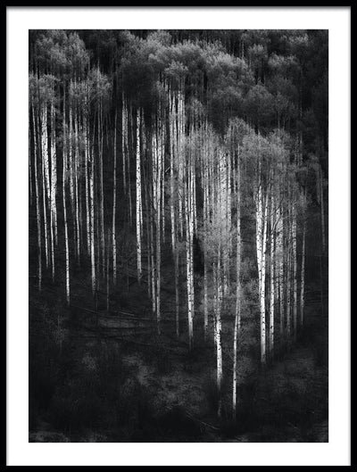 Vossington wall art and fine art photography of a forest scenery with abstract trees