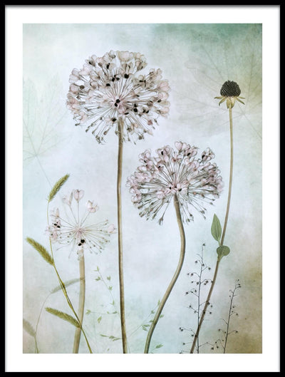 Vossington wall art and fine art photography of decorative alliums and other plants
