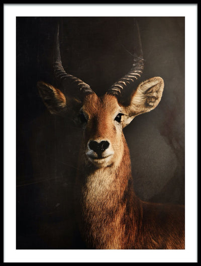 Vossington wall art and fine art photography of a beautiful antelope