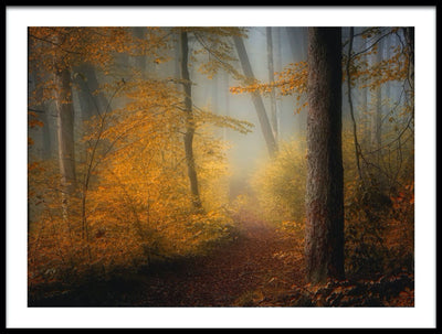 Vossington wall art and fine art photography of an autumn forest scenery with tall trees and a path through the woods