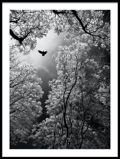 Vossington wall art and fine art photography of a forest scenery with a bird in the sky above tall trees