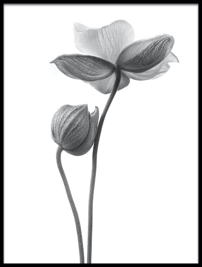 Vossington wall art and fine art photography of two black and white flowers against a white background