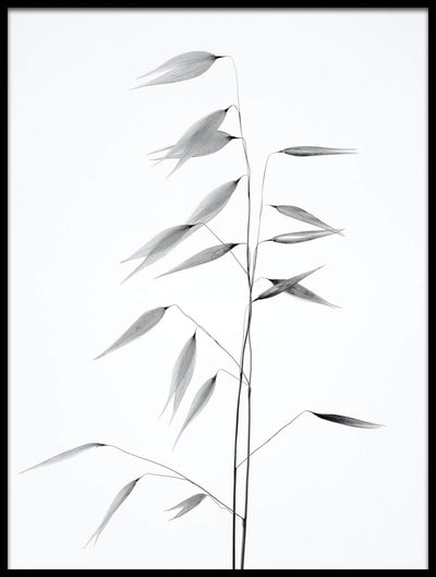 Vossington wall art and fine art photography of a black and white plant against a white background