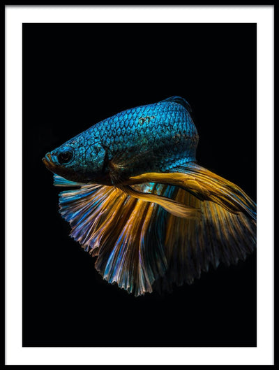 Vossington wall art and fine art photography of a blue fish in dark water