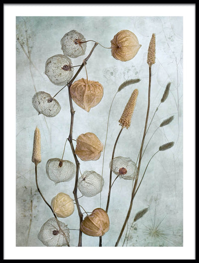 Vossington wall art and fine art photography of a lantern-shaped plant