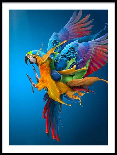 Vossington wall art and fine art photography of a flying macaw with splashing colors