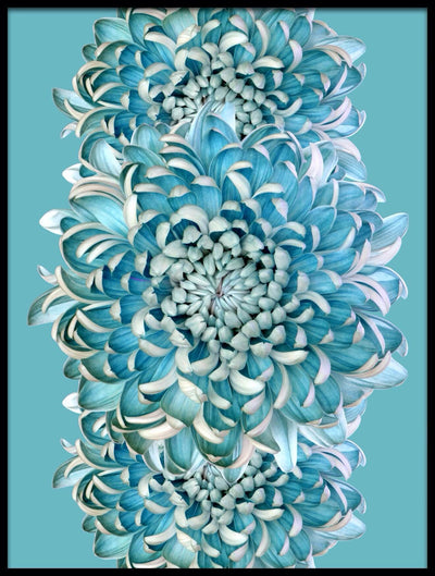 Vossington wall art and fine art photography of a colorful chrysanthemum flower