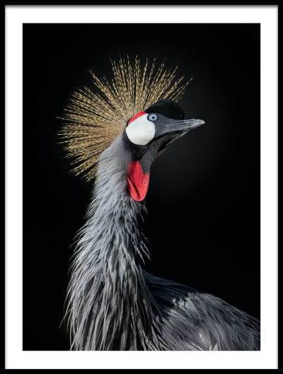 Vossington wall art and fine art photography of a majestic crowned crane striking a pose