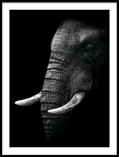 Vossington wall art and fine art photography of an abstract elephant with tusks against a black background