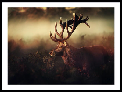 Vossington wall art and fine art photography of a landscape scenery with a deer with antlers in a misty forest