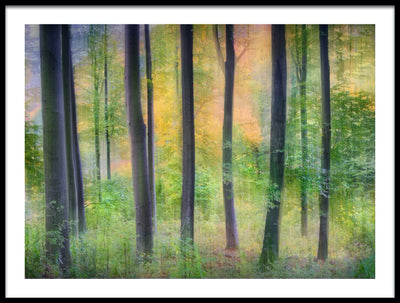 Vossington wall art and fine art photography of a colorful forest scenery with abstract trees