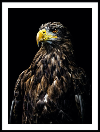 Vossington wall art and fine art photography of a mighty eagle against a black background