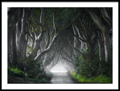Vossington wall art and fine art photography of a forest scenery with tall trees and a road through the woods