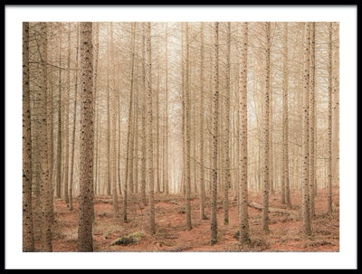 Vossington wall art and fine art photography of a forest scenery with bare trees