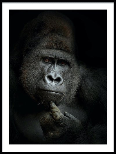 Vossington wall art and fine art photography of a gorilla against a black background