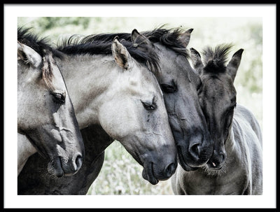 Vossington wall art and fine art photography of an act of love and friendship with four horses cuddling