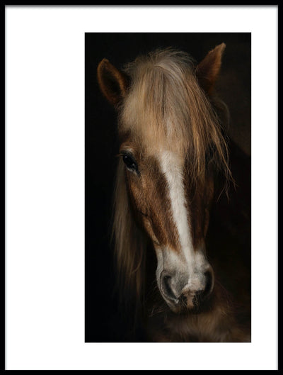 Vossington wall art and fine art photography of a horse against a black background