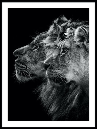 Vossington wall art and romantic fine art photography of the profile of a lion and lioness couple against a black background