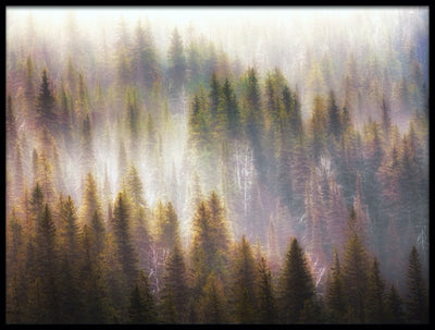 Vossington wall art and fine art photography of a dreamy foggy forest with layers of fir trees in an abstract style